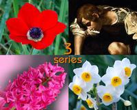 花になった神話 ベスト3