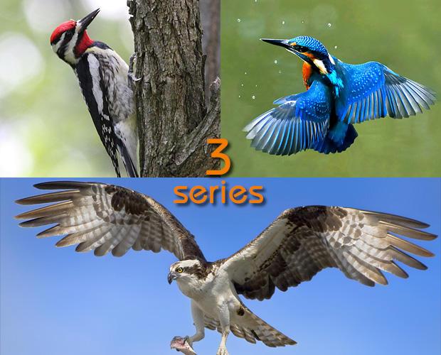 鳥になった神話 ベスト3