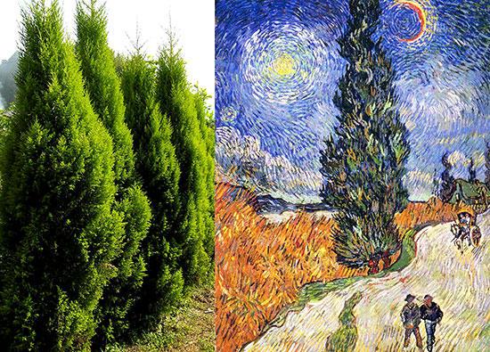 ゴッホ「糸杉と星の見える道」