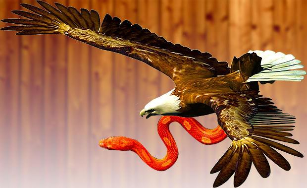 鷲と赤い大蛇