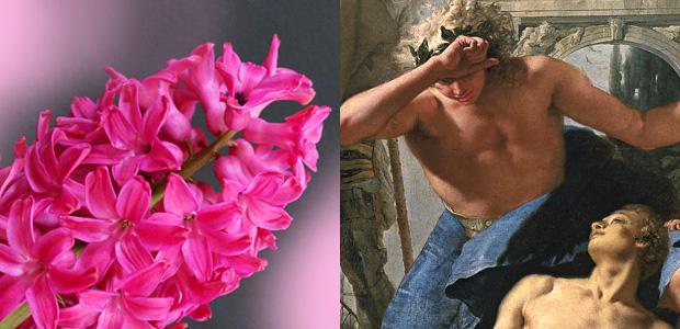 ヒアシンスの花になったヒュアキントス